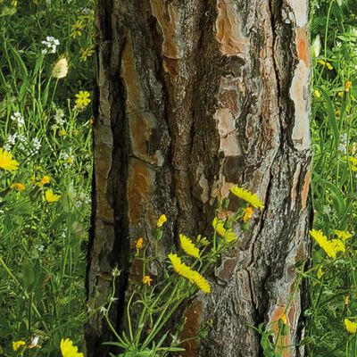 Komar Fotobehang Blutenzauberwald 450x280 cm