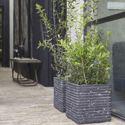 Capi Plantenbak Nature Row vierkant 40x40 cm antraciet KRWZ903